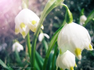 march_flowers_1_by_love1008-d3bbil2