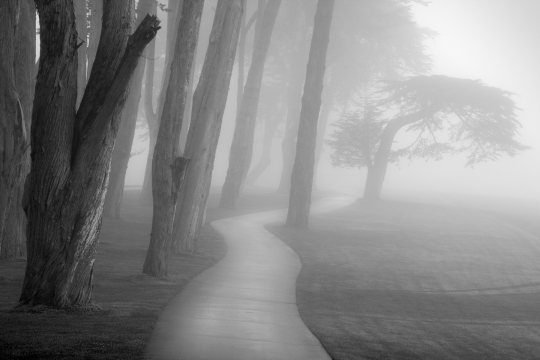 trees_in_fog_study_9